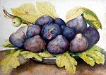 Giovanna Garzoni: Plate of Figs